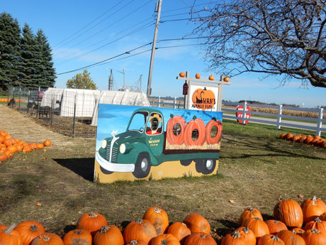Swan's Pumpkin Farm in Racine County - School Tours