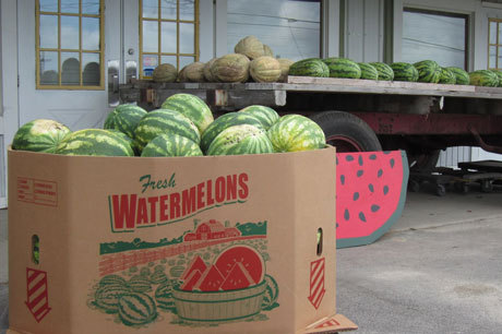 Swan's Pumpkin Farm in Racine County - Wholesale Watermelons Available