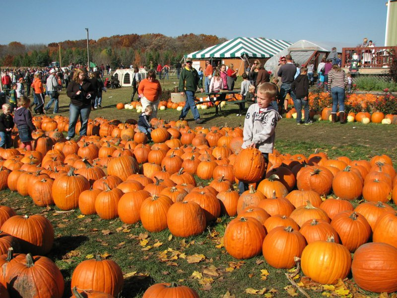 Swan's Pumpkin Farm in Racine County - Pumpkin Patch